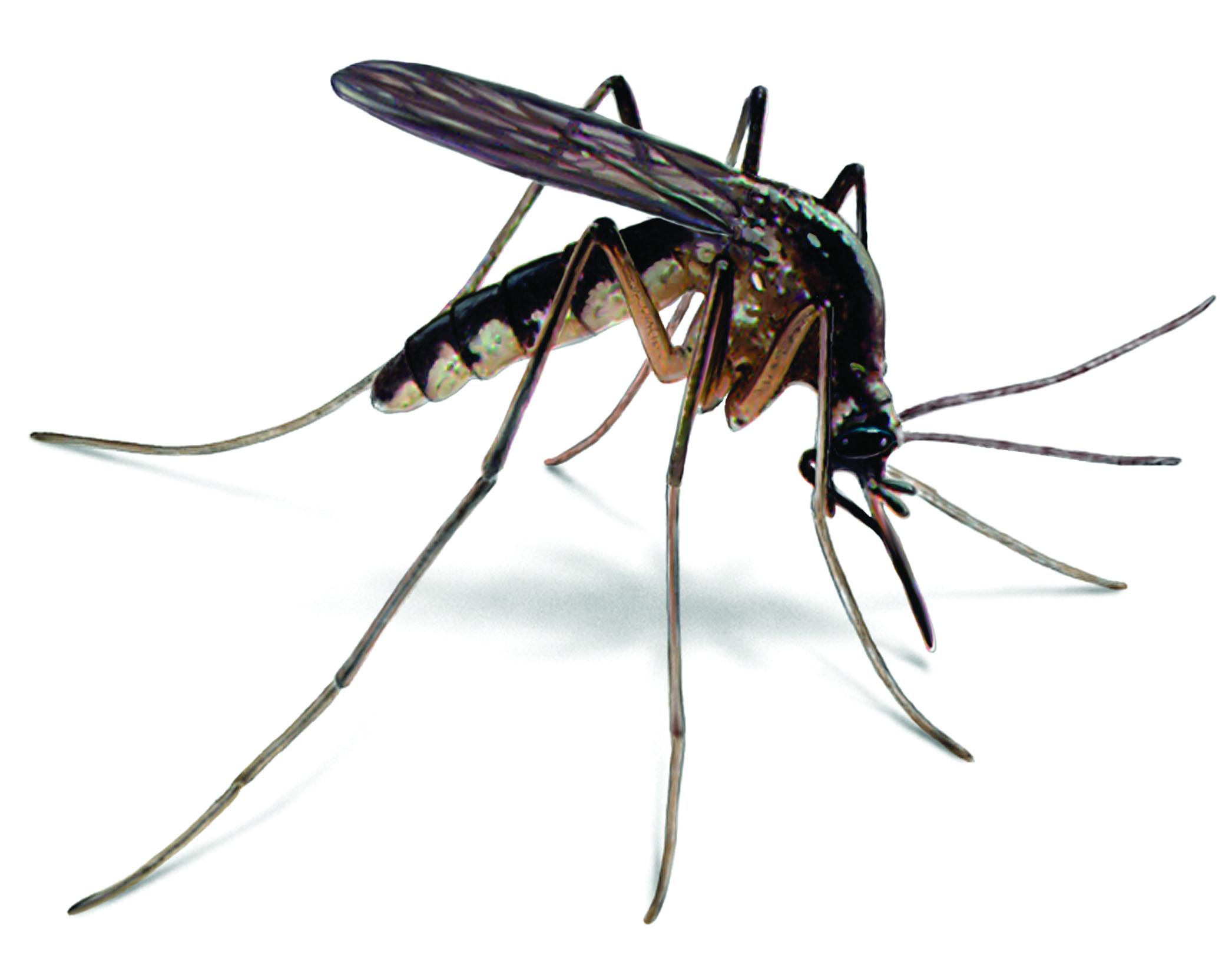 Mosquito Control Tree Amp Turf Professionals Inc