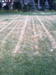 Mower/heat stress on turf - lawn maintenance.