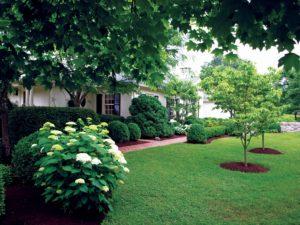 Tree Service, Tree Care Service