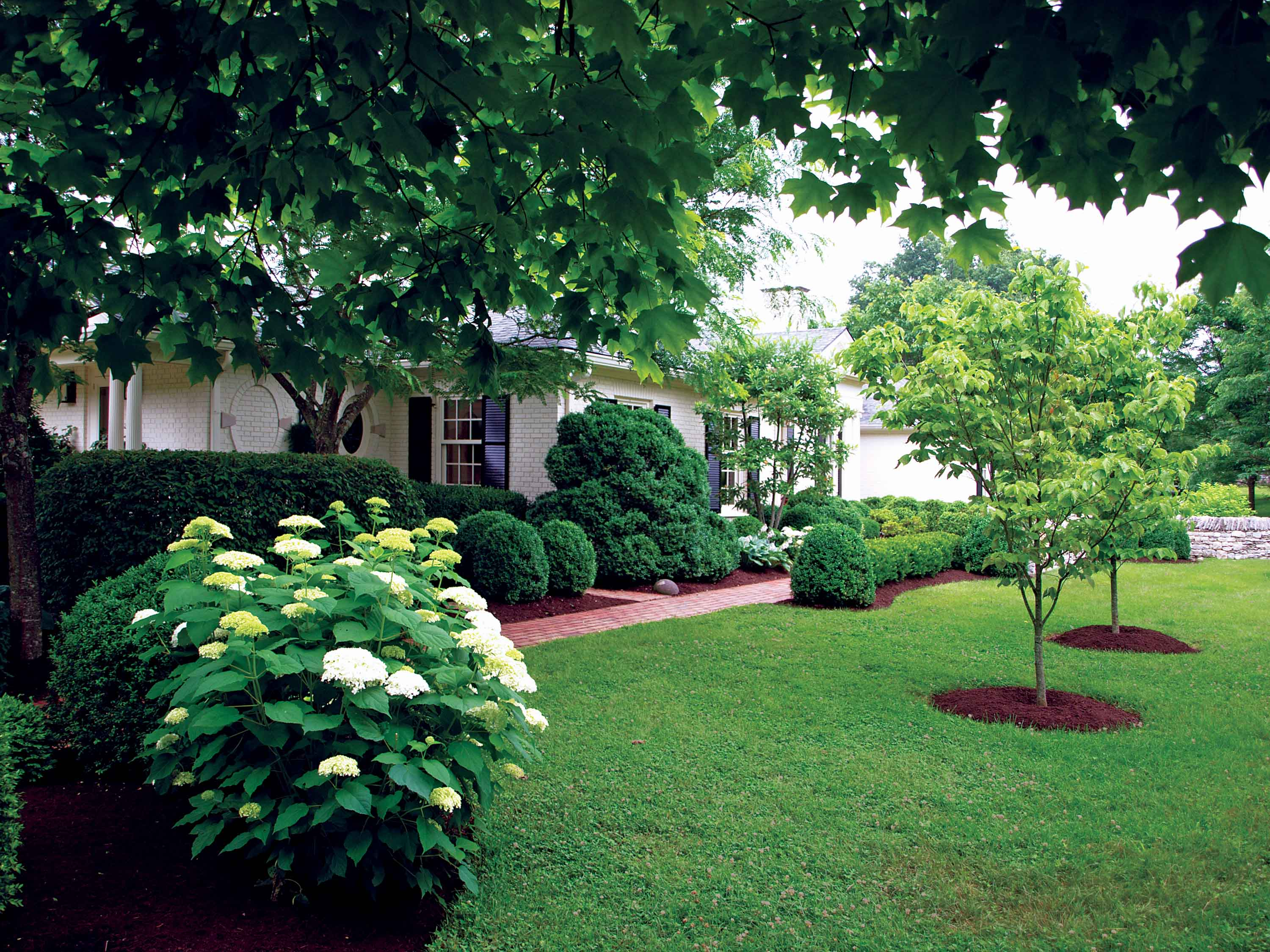 Tree care service fertilization insect and disease control for Tree and garden services